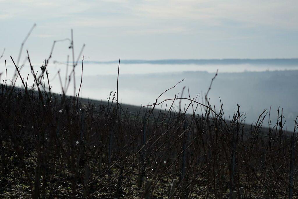 02_vignes-bourgogne-vin-nantoux-maison-frederic-leprince