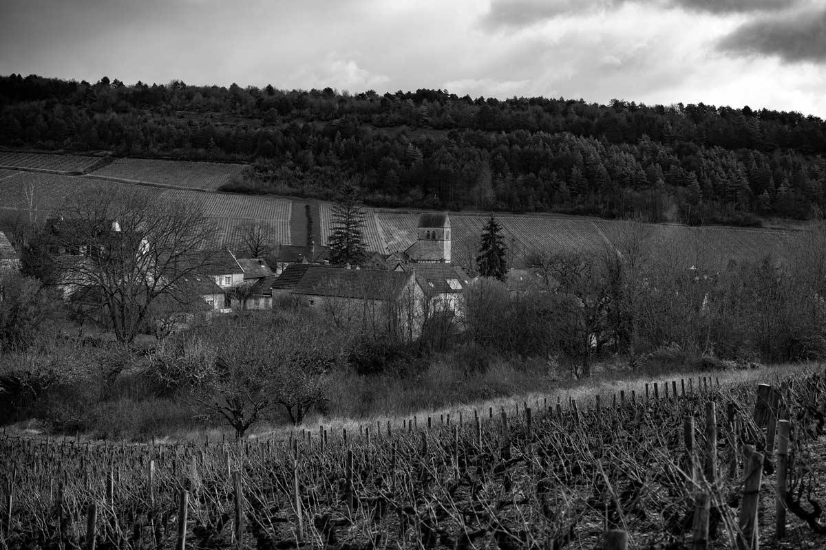 frederic-leprince-vin-Nantoux